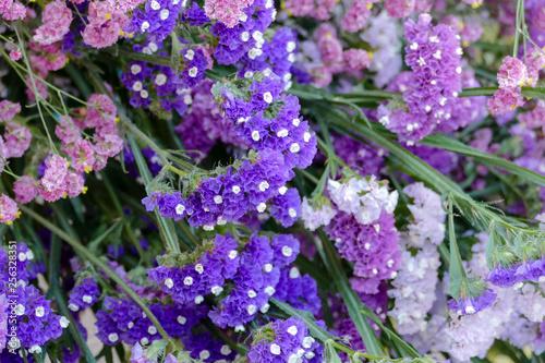 Lavender flowers in closeup - 256328351