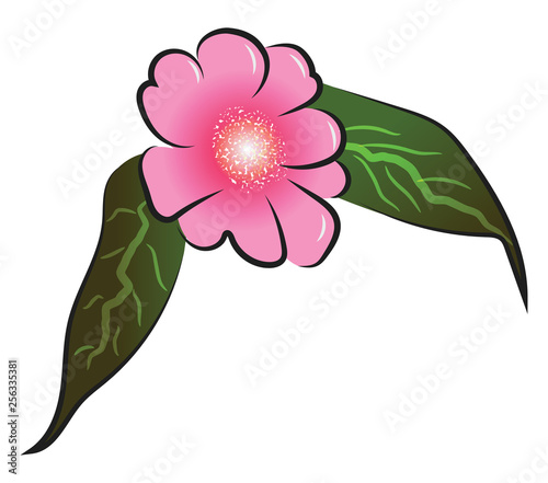 Pink flower with leafs vector or color illustration