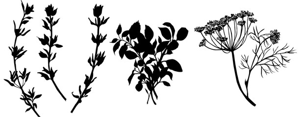 Flavouring herbs. Black and white illustration © annakonchits