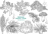 Vector set of seaweeds and corals. Black and white illustration. Isolated elements for design.