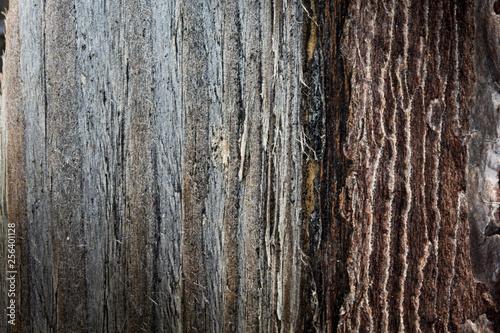 Holzstruktur als Hintergrund © Eigens