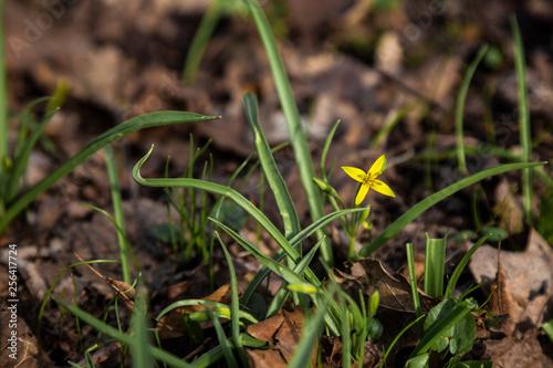 Wiosna, pierwsze kwiaty