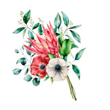 Watercolor bouquet with protea, anemone and eucalyptus leaves. Hand painted flower and branch isolated on white background. Nature botanical illustration for design, print. Realistic delicate plant. - 256427920