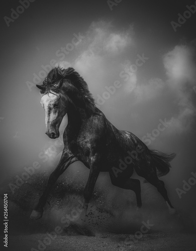 Young stallion in a dramatic shot