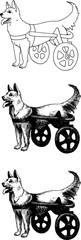 Dog with disabilities © Olga M