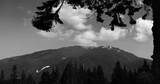 Mountain peaks in bright sunlight. Fir tree silhouette in the foreground
