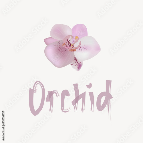 Vector illustration with gentle orchid. - 256514957