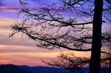 Fototapeta Fototapety na ścianę - Sunset in the forest © wiha3