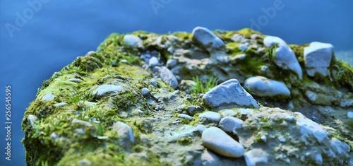 rocky shore of a mountain river with grass and moss