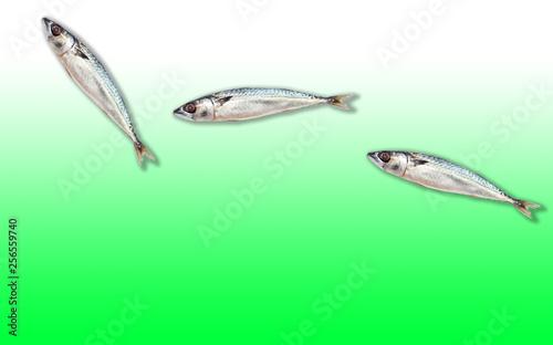 Leinwandbild Motiv Fishes arranged on a fresh color background