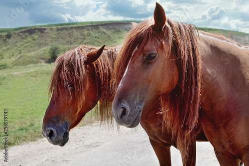 Red horses with long mane against sky