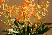 """Постер, картина, фотообои """"Orange orchid in noon"""""""