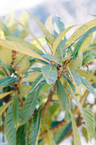 The texture of the foliage and green background for design. Sunlight and glare on the leaves.