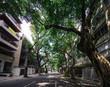 Quadro View of tree-lined avenue in Ipanema, Rio de Janeiro, Brazil