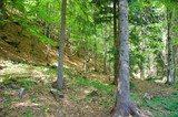 Fototapeta Forest - Zielony las © szafig