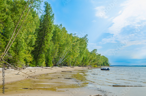 Panoramic view of the sandy river Bank with birch forest and green leaves in summer. - 256715353