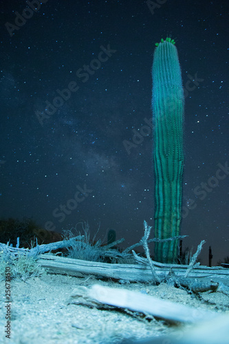 Saguaro Cactus with stars as background  - 256734510