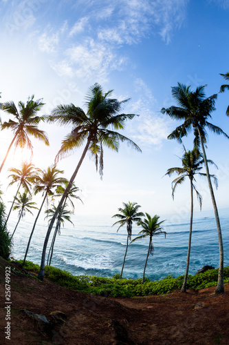 Palm trees at sunny seaside hill