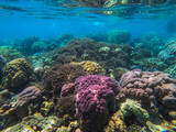 beautiful coral in diving spot Surin island - 256757716