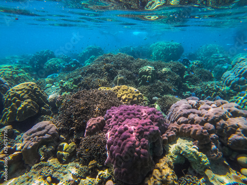 beautiful coral in diving spot Surin island