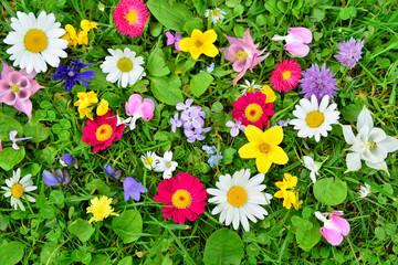 bunte Blumen Wiese Frühling