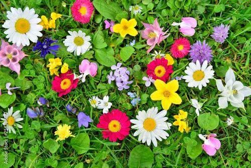 bunte Blumen Wiese Frühling - 256796137