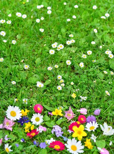 bunte Blumen Wiese Frühling als Hintergrund - 256796198