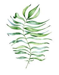 Watercolor monstera leaf. Tropical plant illustration