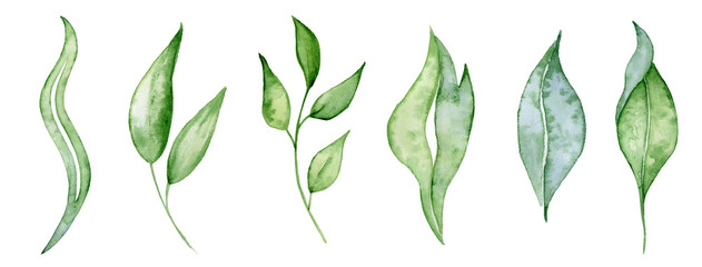 Watercolor green leaves and brunches Greenery herb hand rawn illustration © EvgeniiasArt