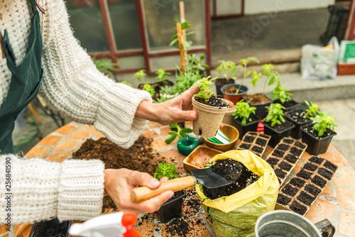 Planting herbs in my home garden