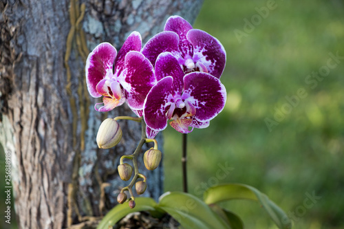 pink orchid - 256888988