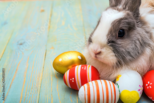fototapeta na ścianę Cute fluffy rabbit and painted eggs, easter concept