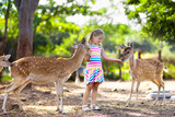 Child feeding wild deer at zoo. Kids feed animals.