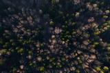 Fototapeta Forest - Forest from above © Piotr