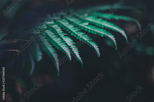 Green fern plant in summer forest nature