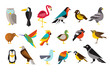 Various bird set colorful vector illustrations