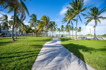 Bright scenic morning view of palm trees casting shadows in morning sun on the promenade on Ocean Drive in South Beach, Miami, Florida, USA