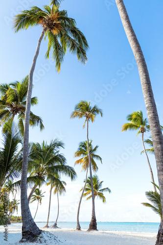 Leinwandbild Motiv Coconut palm trees an pristine bounty beach