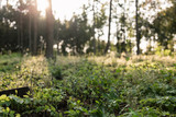 Fototapeta Forest - Las © Michał Magiera