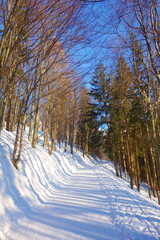 Snowy hiking trail during winter leading to the highest mountain of Beskydy, Lysa Hora, Czech Republic © Tom