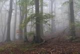 Mgła w Lesie Teutoburskim, Bielefeld