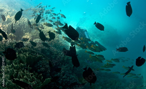 fototapeta na ścianę Underwater World of the Red Sea