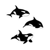 Vector illustration of hand drawn killer whale set. Marine animal Orcinus orca family