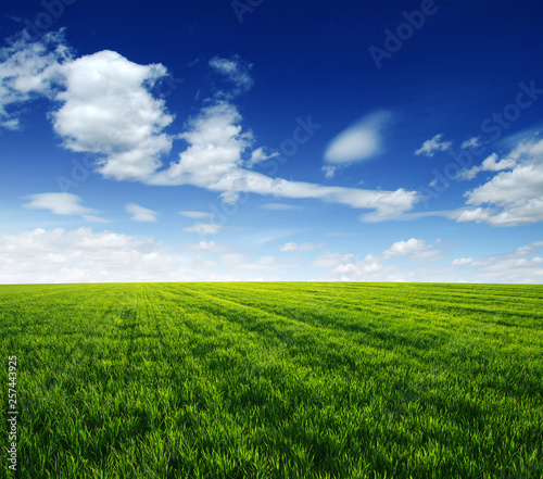 green field and blue sky - 257443925