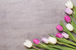 Spring greeting card, pink color tulips on the gray background. - 257497978