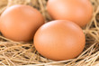 Fresh raw brown eggs on hay (Selective Focus, Focus on the front of the first egg) - 257708700