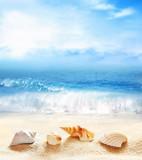 Summer beach. Seashell on a sand and ocean. - 257740141