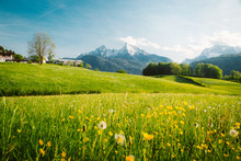 "Постер, картина, фотообои ""Idyllic landscape in the Alps with blooming meadows in springtime"""