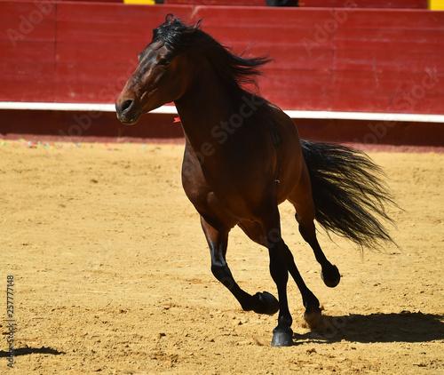 horse in spain © alberto