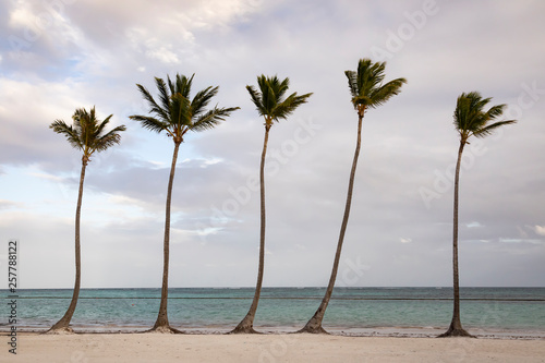 5 palm trees in a row on a beach in the Dominican Republic